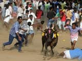 Video : Tamil Nadu Ordinance Allowing Jallikattu Cleared By Law Minister