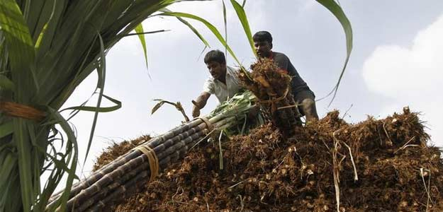 Government Announces Rs 6,268 Crore Subsidy For Sugar Export