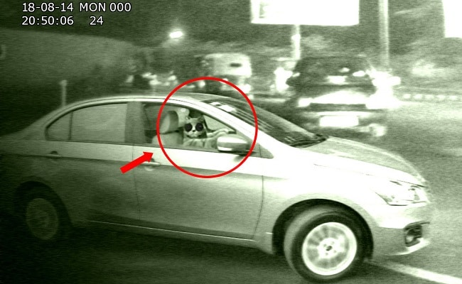 Lady Faints At Traffic Light Spots Cat Driving A Car