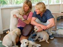 <i>Marley and Me</i> Sequel on TV Soon