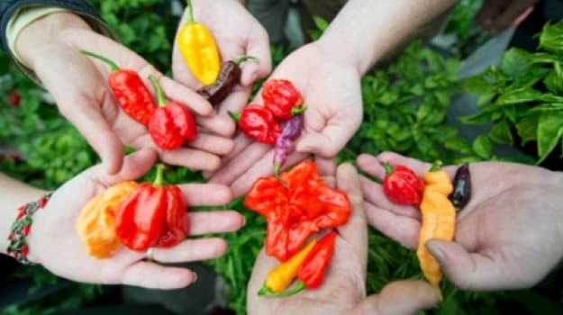 Feeling Hot Hot Hot? Learn to Love Chillies