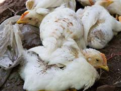 France Detects First Bird Flu Outbreak in Eight Years