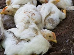 बर्ड फ्लू से दिल्ली में 70 से ज्यादा पक्षियों की मौत, एक और पार्क बंद किया गया