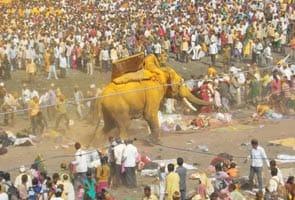 महाराष्ट्र में बेकाबू हाथी ने एक को कुचला