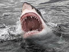 Woman Swimmer Killed in Shark Attack on Indian Ocean Island