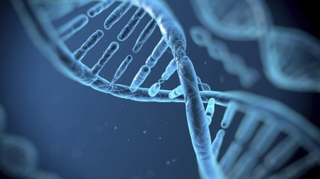 Gene Editing Tool Treats Muscular Dystrophy In Adult Mammal