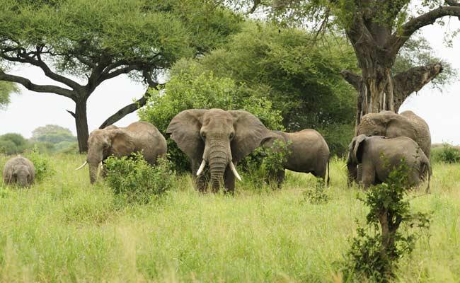 'Gods In Shackles': Elephant Agony Reaches Kerala Assembly