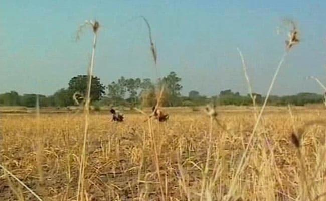 Centre To Decide Compensation To UP, Maharashtra For 2017 Crop Damage