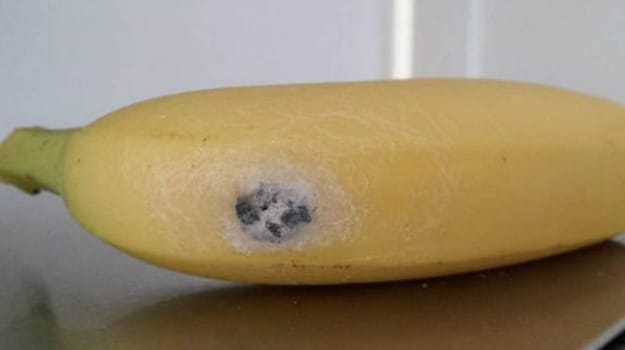 Jeepers Creepers: One of the World's Deadliest Spiders Found in Supermarket Bananas