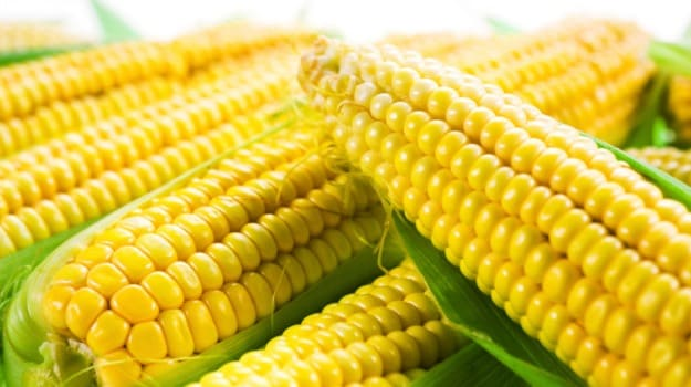 Soon, Run Your Car On Fuel From Corn