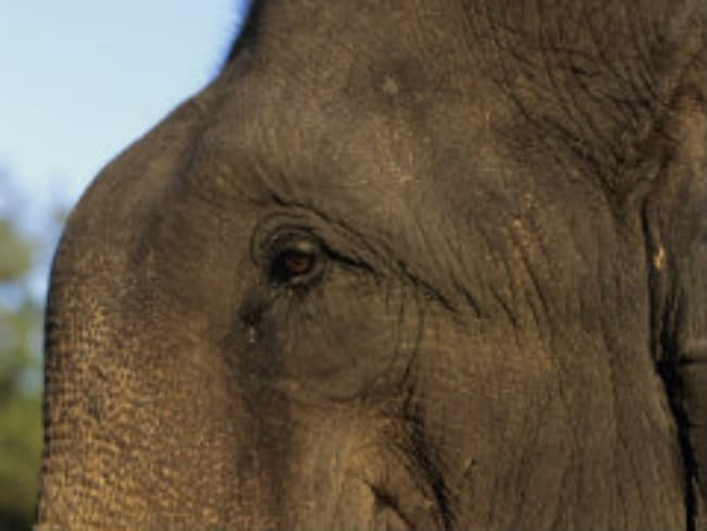 Kerala Government Bats For Ban On Elephant Parading: K Raju