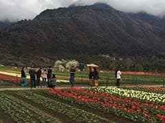 Asia's Largest Tulip Garden is in Full Bloom in Srinagar