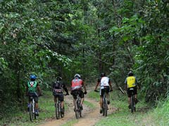 Forest Paradise Re-Emerges in Philippine Capital