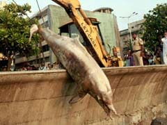 Mumbai: BMC Dumps Dead Dolphin in Trash!