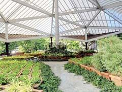 मुगल गार्डन देखने की इच्छा 12 फरवरी से होगी पूरी
