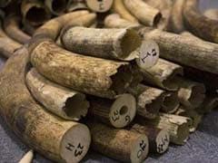 Billion Dollar Ivory and Gold Trade Fuelling Democratic Republic of Congo War: UN