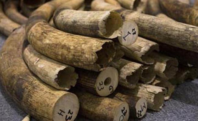 Thailand Destroys Over 2 Tonnes of Smuggled Ivory