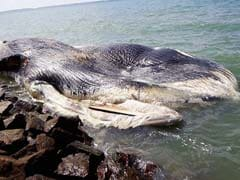 Carcass of Whale Washes Ashore in Tamil Nadu