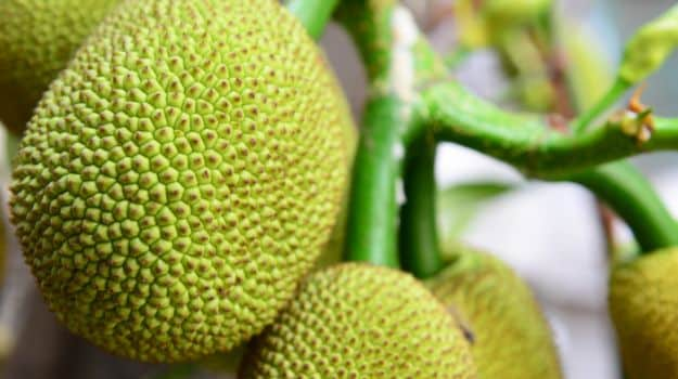 Grocery Shopping Guide: How to Buy and Store Jackfruit (Kathal)