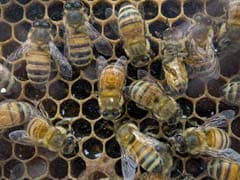 Oslo Creates World's First 'Highway' to Protect Endangered Bees