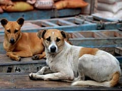 31 Dogs Attacked With Acid, Machetes At Mohali Shelter