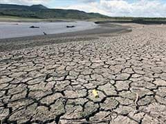 El Nino Has Emerged, India Among Worst Hit as Asia Braces for Crop Damage