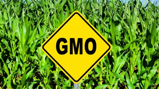 What is GMO? 6 Most Common Genetically Modified Foods