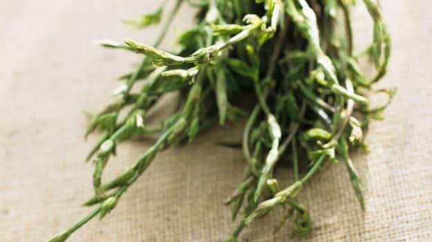 'It's Like Eating a Hedgerow': Why Do Hop Shoots Cost 1,000 Euros a Kilo?