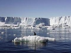 अंटार्कटिका में विशाल हिमखंड ने ली 1.5 लाख पेंगुइनों की जान