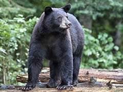 छत्तीसगढ़ के महासमुंद जिले में भालू के हमले में डिप्टी रेंजर समेत तीन की मौत