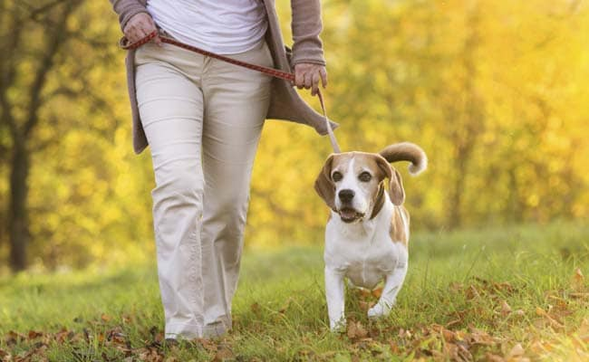 Dogs Snub People Who Are Mean to Their Owners: Study