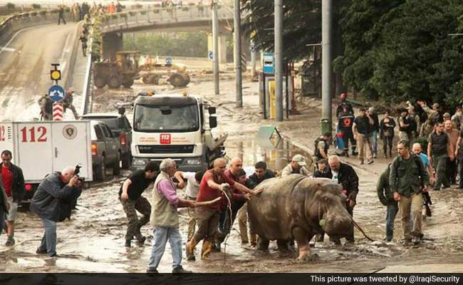 In Flood-Hit Tbilisi, Lions, Tigers and Bears Roam the Streets