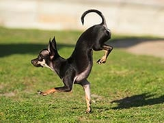 This Dog Breaks World Record for Being Fastest on 2 Paws