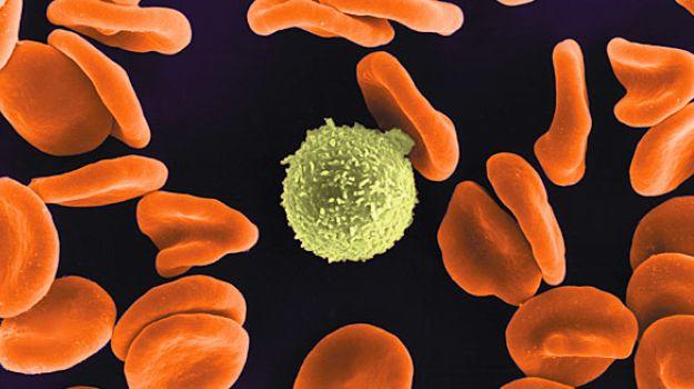 Cellulose Nanogenerators May Power Medical Implants