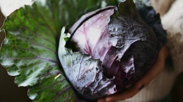 Season's Eating: Pickled Red Cabbage