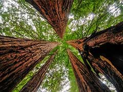 Forest Protection Scheme Sewn up at UN Climate Talks
