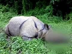Rhino Killed in Assam's Kaziranga Park
