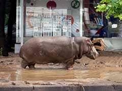 Animal-Lovers Demand Answers Over Georgia Zoo Killing Spree