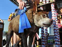 Hunchbacked US Mutt Crowned 'World's Ugliest Dog'