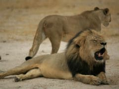 Cecil Stirs the World But Africans See 2 Sides to Hunting Debate