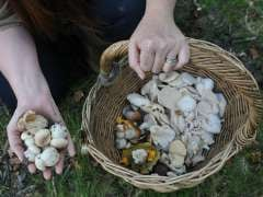 Foraging Craze Clears New Forest of Fungi, Warns Mushroom Expert