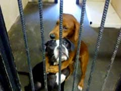 Facebook Just Helped These Dogs Hugging Each Other. Here's How
