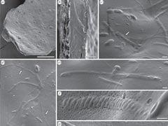 50 Million Year Old Sperm Found in Antarctica: Report