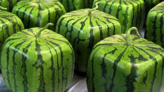 Pricey Produce: Cube & Heart Shaped Watermelons in Japan