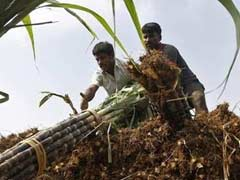 Coca-Cola Working With 48,000 Farmers To Increase Sugarcane Yield