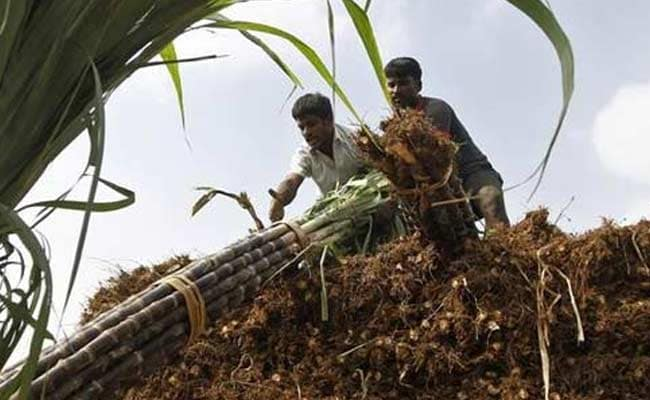Green Economy To Boost Jobs But Farmers Hard Hit: UN Report