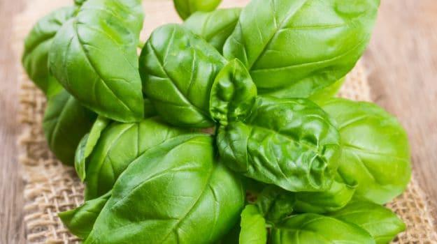 5 ayurvedic herbs 3