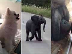 This Puppy, Baby Elephant and Orangutan Will Make Your Monday Better