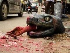 मगरमच्छ के बाद खतरनाक एनाकॉन्डा भी निकल आया बेंगलुरू की सड़कों पर...