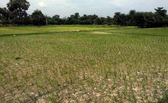 August Records Monsoon Deficiency of 22 Per Cent: Meteorological Department